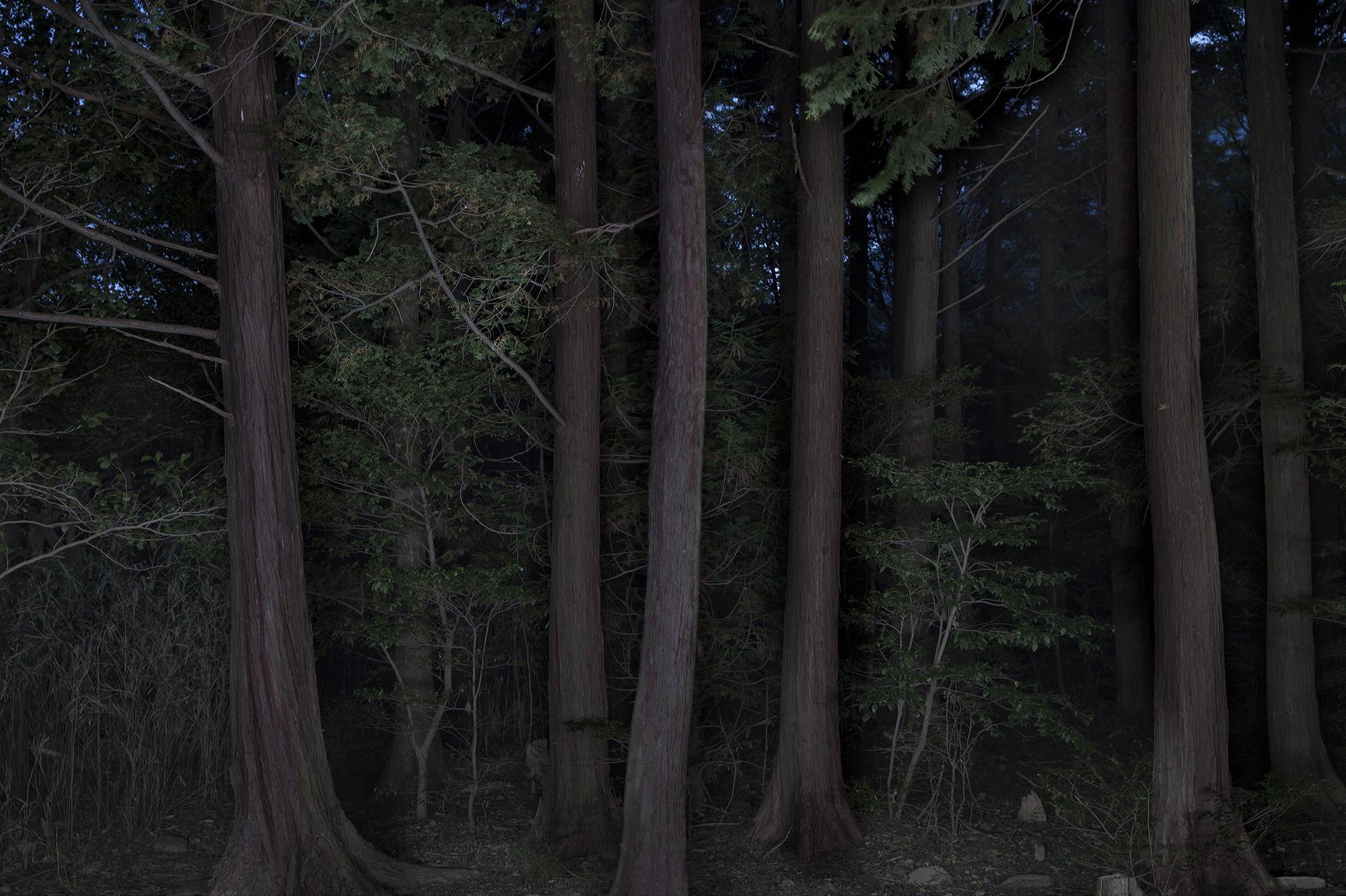 Taejoong Kim, Foresta #7, 2013.