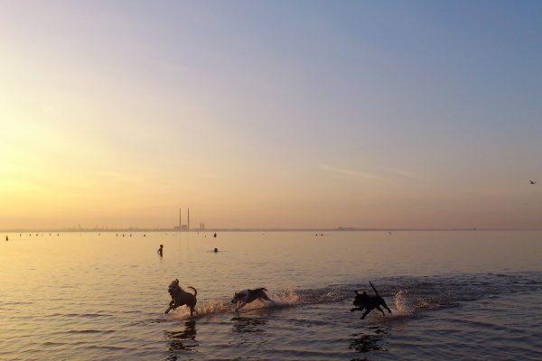 © Aerandir Baiza, Dogs at Play, Seapoint Beach, Dublin, 2013. flickr.com/photos/aerandirbaiza/
