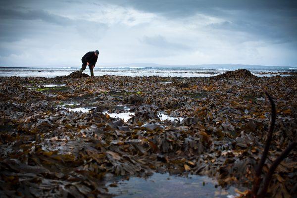 © Yvette Monahan, Seaweed, 2012. seanandyvette.com